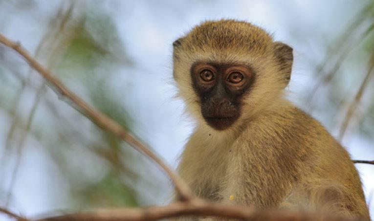 Le singe, la prostituée et la générationY